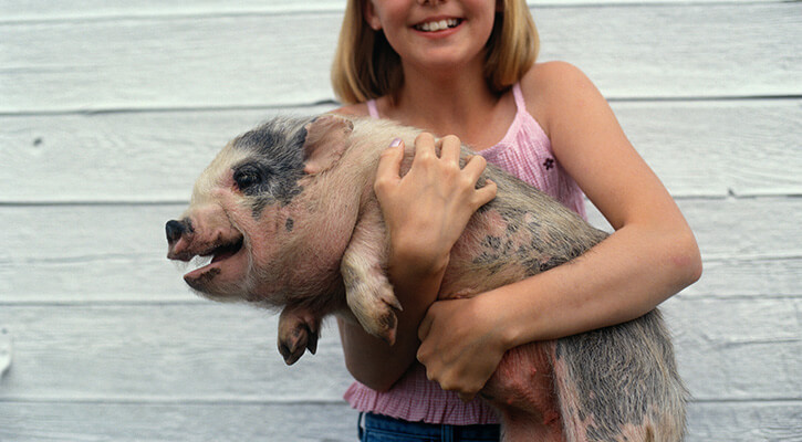 Pot-Bellied Pig Spay/Neuter